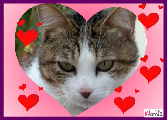 coeur de chat, lolcats réalisé sur Wamiz