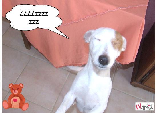 princesse qui dort debout , lolcats réalisé sur Wamiz