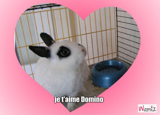 j'aime mon lapin !, lolcats réalisé sur Wamiz
