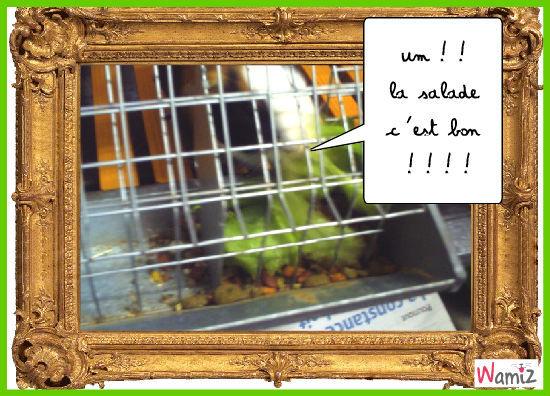 la salade, lolcats réalisé sur Wamiz