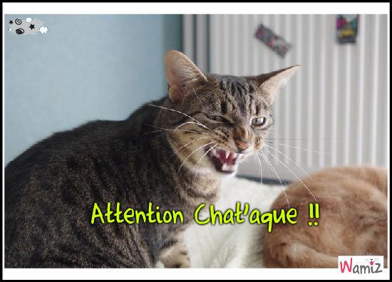 Attention chat'aque, lolcats réalisé sur Wamiz