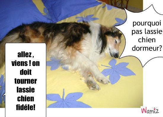 lassie , chien dormeur, lolcats réalisé sur Wamiz