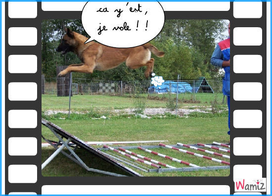 chien volant, lolcats réalisé sur Wamiz