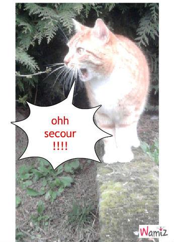 chat chat fait peur , lolcats réalisé sur Wamiz