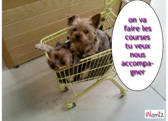 les chiens font leurs courses, lolcats réalisé sur Wamiz