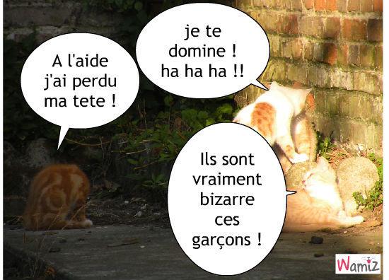 les chatons fou !!, lolcats réalisé sur Wamiz