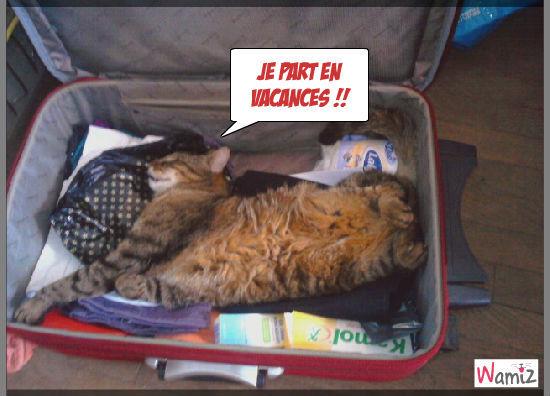 chat voyage, lolcats réalisé sur Wamiz