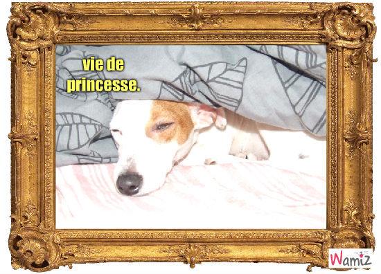 vie de princesse, lolcats réalisé sur Wamiz