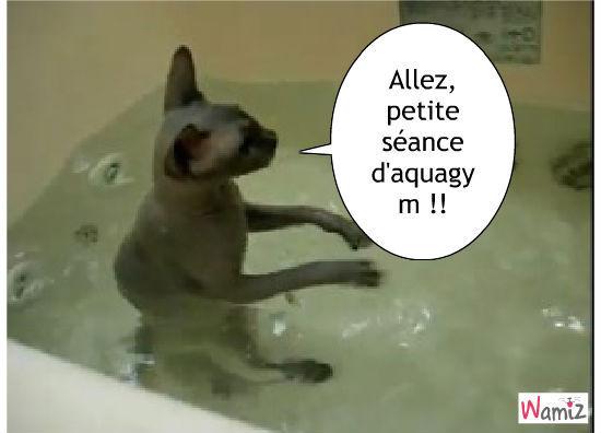 Aquagym pour chat, lolcats réalisé sur Wamiz