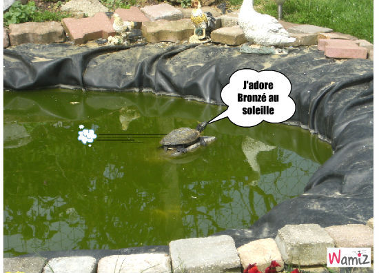 tortue bronzette, lolcats réalisé sur Wamiz