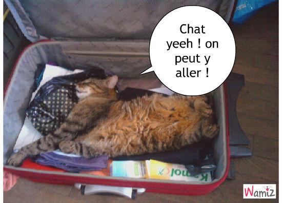 chat passer vite ces vacances !, lolcats réalisé sur Wamiz