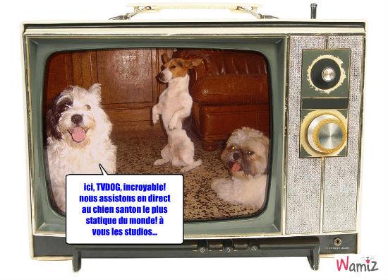Bonny, le chien-santon, lolcats réalisé sur Wamiz