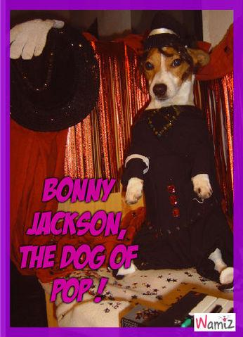 Michael jackson and the dog of pop : Bonny, lolcats réalisé sur Wamiz