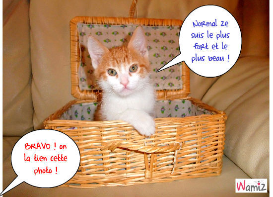 Le chat top modèle !, lolcats réalisé sur Wamiz