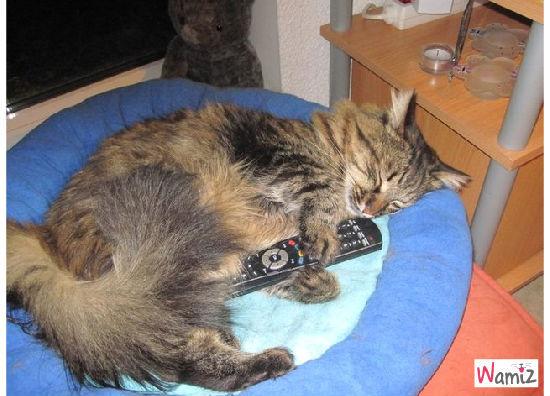 jumeau de mon chat Jazzy, lolcats réalisé sur Wamiz