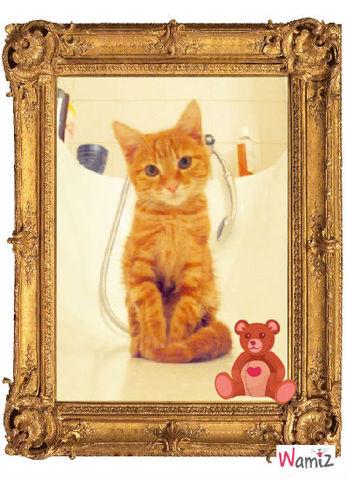 chats , lolcats réalisé sur Wamiz