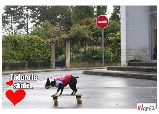 love skate, lolcats réalisé sur Wamiz