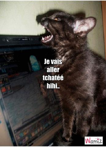 chat , lolcats réalisé sur Wamiz