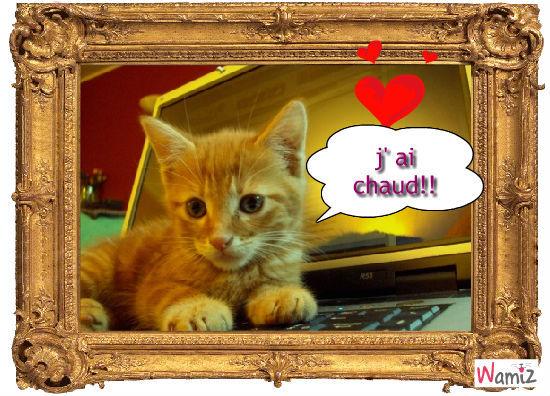 chat avec amour, lolcats réalisé sur Wamiz