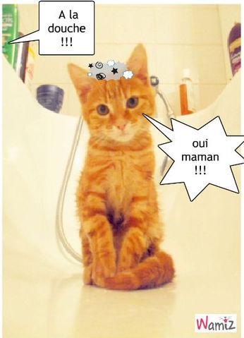 douche !!!, lolcats réalisé sur Wamiz