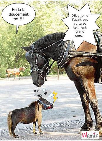 lol doucemant petit cheval, lolcats réalisé sur Wamiz