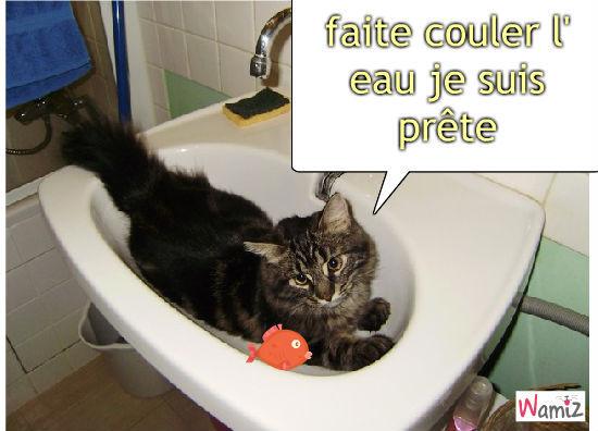 chat chat , lolcats réalisé sur Wamiz