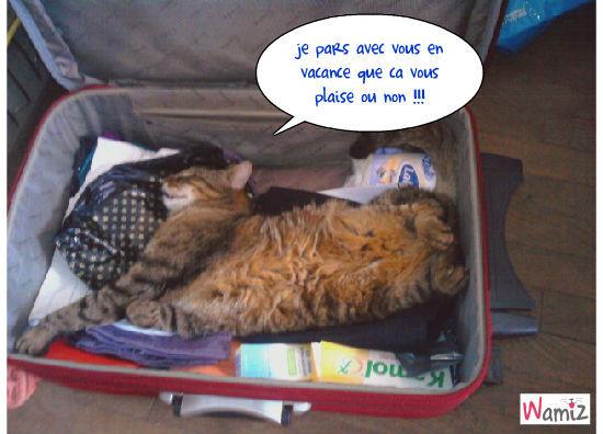 chat dans la valise, lolcats réalisé sur Wamiz