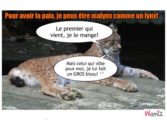 Malynx le Lynx!, lolcats réalisé sur Wamiz