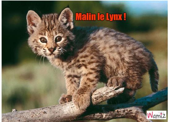 Malin le lynx!, lolcats réalisé sur Wamiz