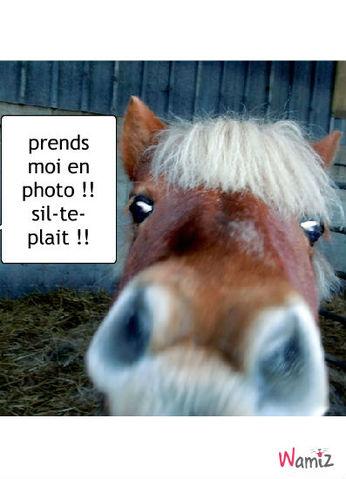 poney qui veux une photo, lolcats réalisé sur Wamiz