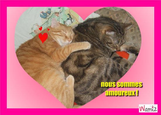 deux chats amoureux, lolcats réalisé sur Wamiz