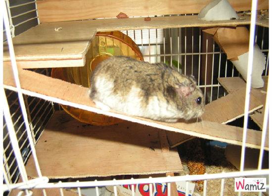 Hamster.Fred Hamster, lolcats réalisé sur Wamiz