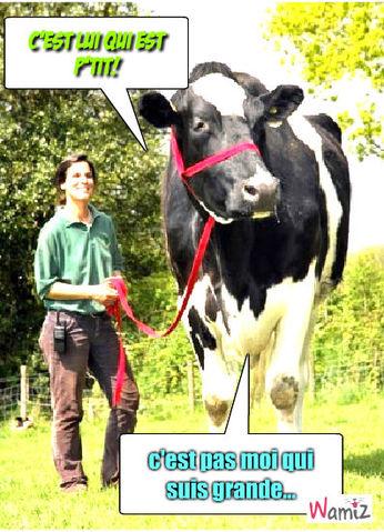 La vache!!, lolcats réalisé sur Wamiz