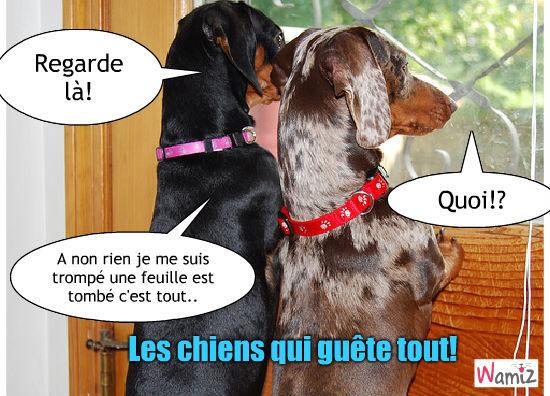 Les chiens qui guêtent tout, lolcats réalisé sur Wamiz