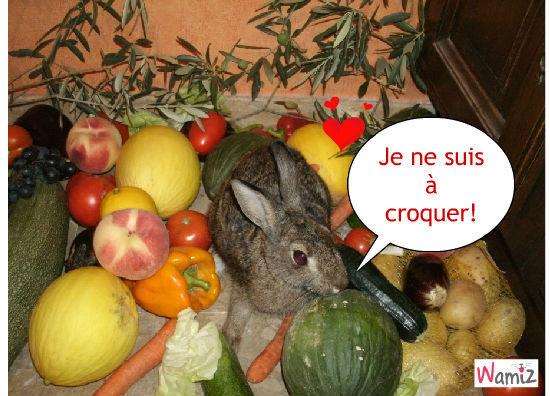 Salade de ...Fruit, lolcats réalisé sur Wamiz