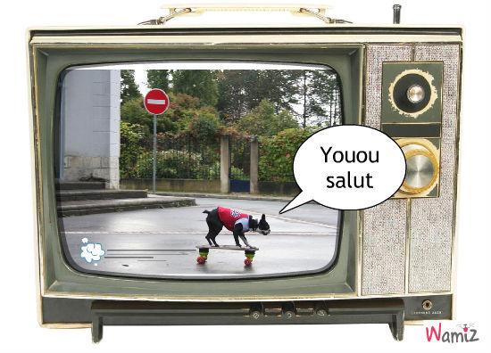 Show, lolcats réalisé sur Wamiz