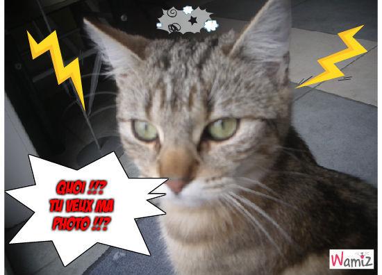 Tu veux ma photo !!?, lolcats réalisé sur Wamiz