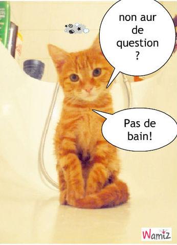 Non au bain!, lolcats réalisé sur Wamiz