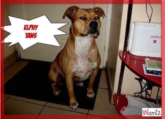 Elphy, lolcats réalisé sur Wamiz