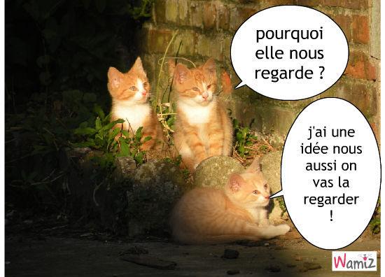 les chatons , lolcats réalisé sur Wamiz