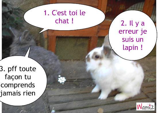 chat ou lapinou, lolcats réalisé sur Wamiz