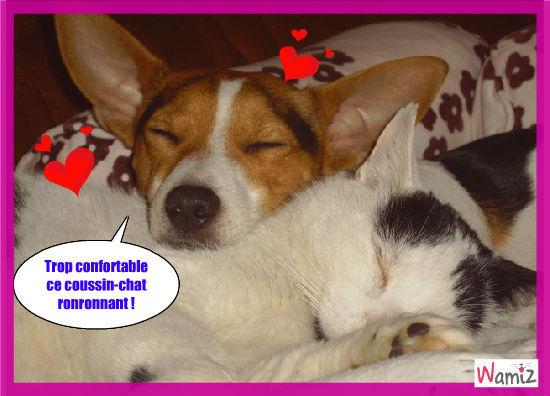 Bonny et son coussin-chat Gribouille, lolcats réalisé sur Wamiz