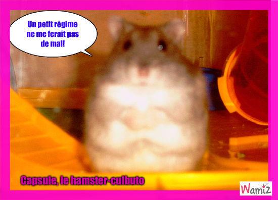Capasule, le hamster-culbuto, lolcats réalisé sur Wamiz