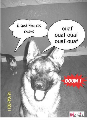 le fou rire du chien, lolcats réalisé sur Wamiz