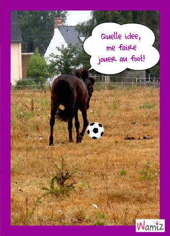 Un cheval au foot!, lolcats réalisé sur Wamiz