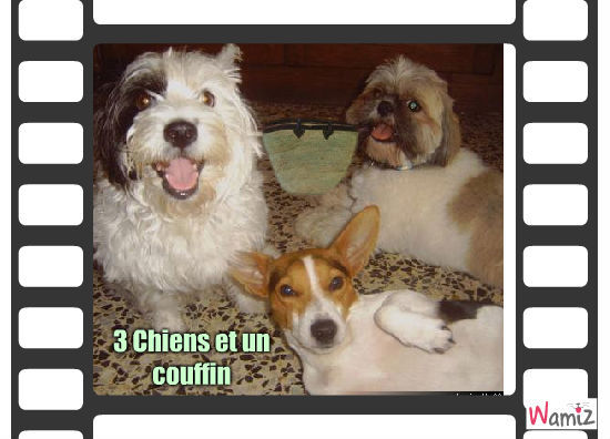 3 chiens et un couffin, lolcats réalisé sur Wamiz