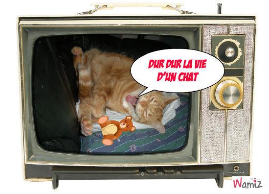 dur dur la vie d'un chat , lolcats réalisé sur Wamiz