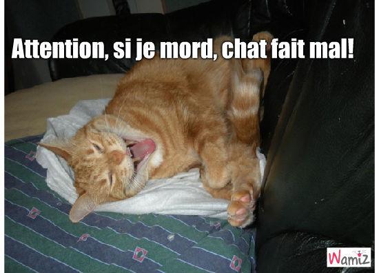 Aïe chat fait mal!, lolcats réalisé sur Wamiz