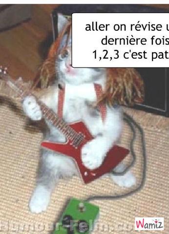 chat rokeur, lolcats réalisé sur Wamiz