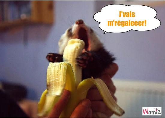Quand un furet rencontre une banane, lolcats réalisé sur Wamiz